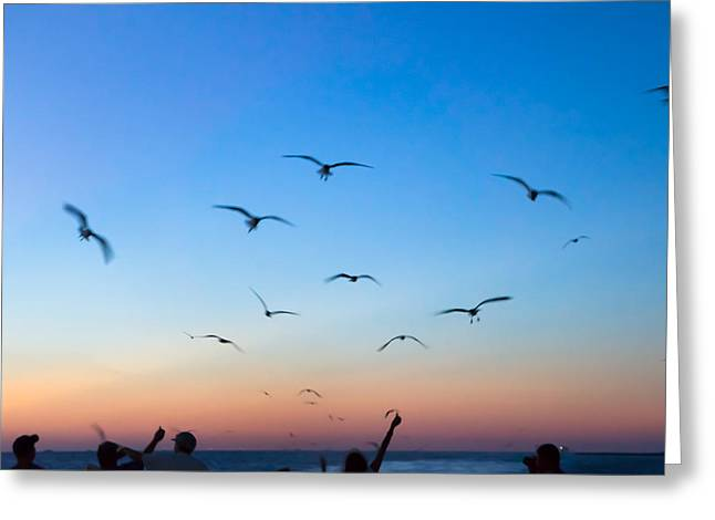 Laughing Gulls In The Evening Sky Greeting Card by Ellie Teramoto