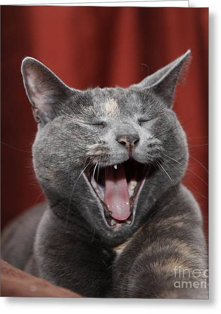 Kitty Digital Art Greeting Cards - Laughing Kitty Greeting Card by Amanda Barcon