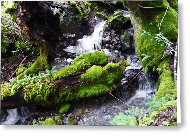 Moss Green Greeting Cards - Laughing Waters Greeting Card by JoAnn SkyWatcher