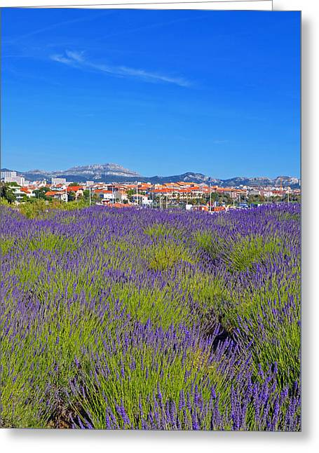 South Of France Greeting Cards - Lavendar of Provence Greeting Card by Corinne Rhode