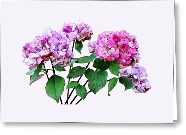 Lavender And Rose Hydrangeas Greeting Card by Susan Savad