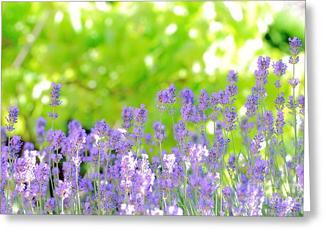 Close Focus Nature Scene Greeting Cards - Lavender background Greeting Card by Gregory DUBUS