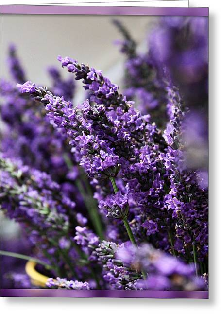 Lavender Greeting Card by Cathie Tyler