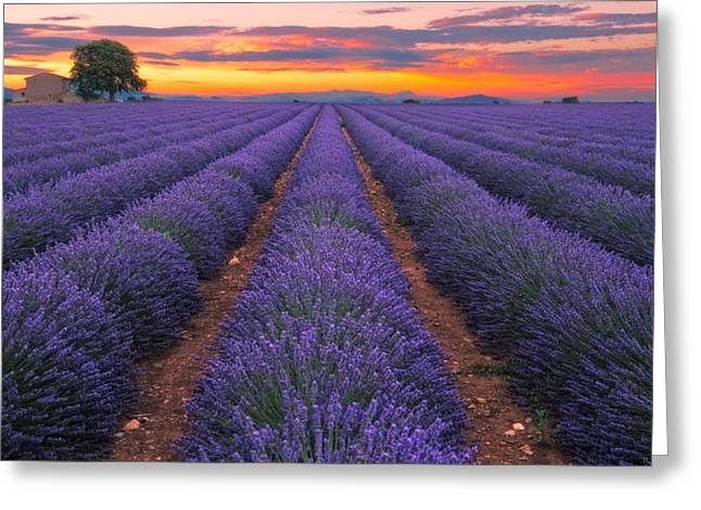 Lavender Dream France Greeting Card by Andre Distel