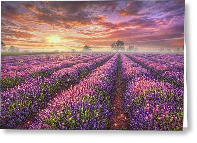 Fantasy Tree Greeting Cards - Lavender Field Greeting Card by Phil Jaeger