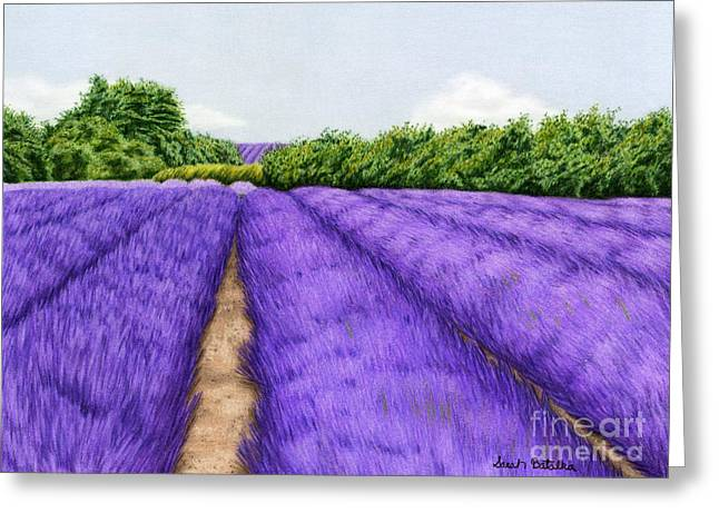 Harvest Drawings Greeting Cards - Lavender Fields Greeting Card by Sarah Batalka