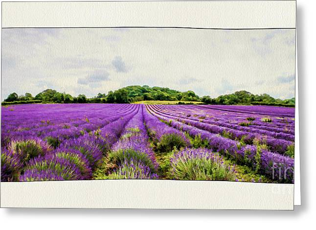 Shabbychic Greeting Cards - Lavender Fields. Greeting Card by ShabbyChic fine art Photography
