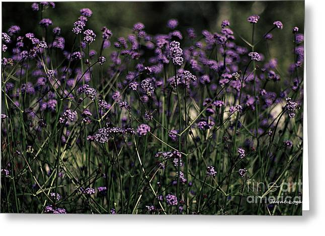 Artography Greeting Cards - Lavender Garden II Greeting Card by Jayne Logan Intveld