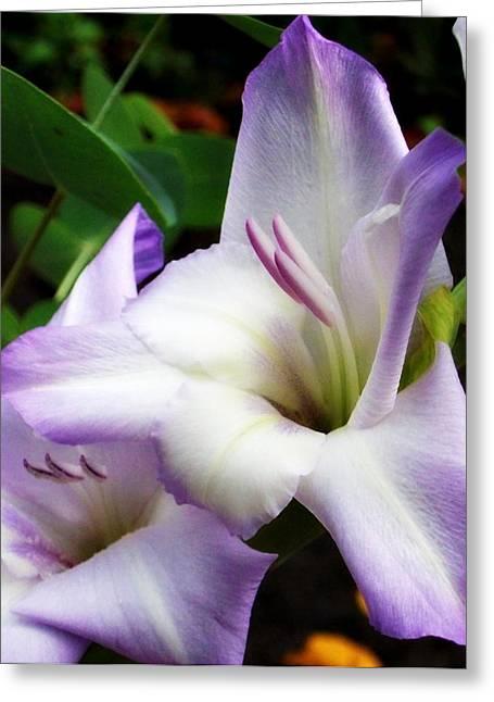 Purple Gladiolas Greeting Cards - Lavender Gladiola Greeting Card by Cathie Tyler