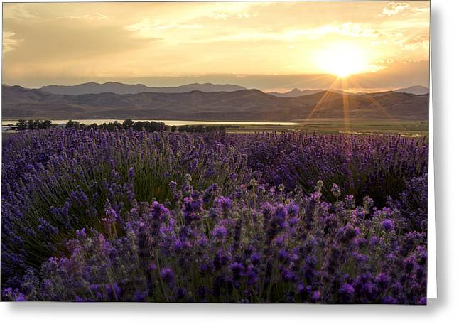Lavender Fields Greeting Cards - Lavender Glow Greeting Card by Chad Dutson