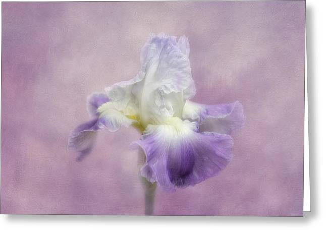 Kim Photographs Greeting Cards - Lavender in the Garden Greeting Card by Kim Hojnacki
