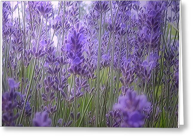 Mikki Cucuzzo Greeting Cards - Lavender Greeting Card by Mikki Cucuzzo