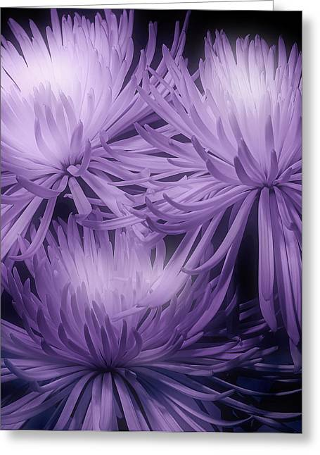 Floral Arrangement Greeting Cards - Lavender Mums Greeting Card by Tom Mc Nemar