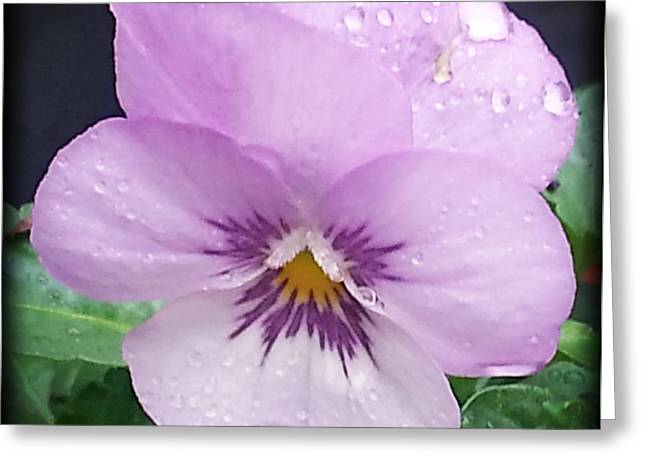Greeting Cards - Lavender Pansy and Rain Greeting Card by Eva Thomas
