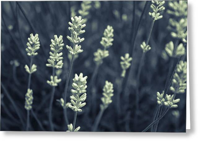 Close Focus Floral Greeting Cards - Lavender Greeting Card by Stewart Scott