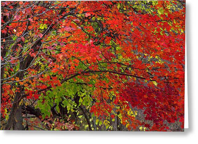Indiana Autumn Photographs Greeting Cards - Layers Greeting Card by Ed Smith