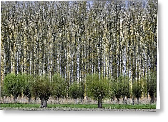 Tree Lines Greeting Cards - Layers Greeting Card by Henk Van Maastricht