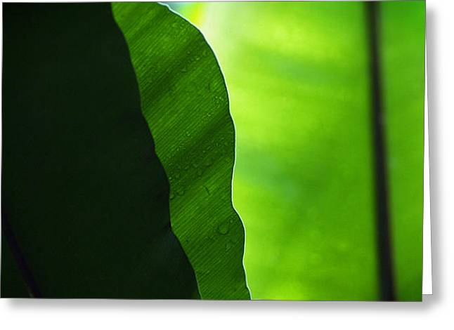 Schweitz Greeting Cards - Layers of green Greeting Card by Philippe Meisburger