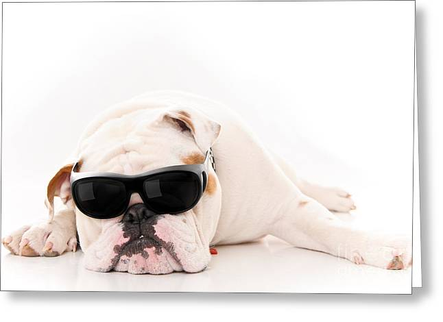 Intrigue Greeting Cards - Lazy But Cool Dog Greeting Card by Jt PhotoDesign