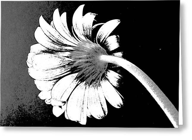 Photographs Of Flowers Greeting Cards - Lazy Daisy Greeting Card by Marsha Heiken