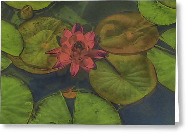 Water Lilly Greeting Cards - Lazy Day at the Lily Pond Greeting Card by Bobbie Barth