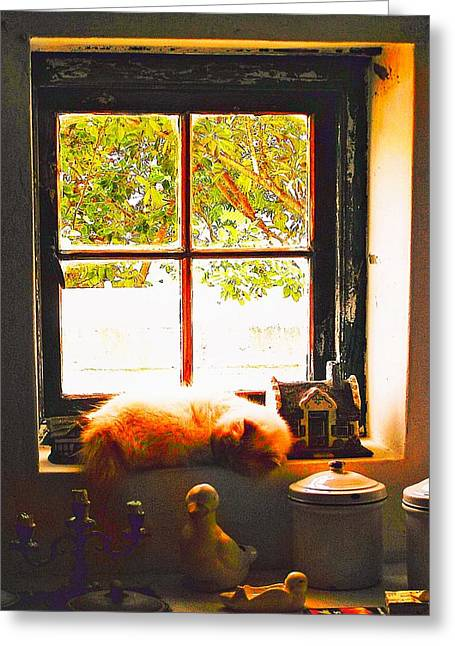 Kitchen Photos Greeting Cards - Lazy Day Greeting Card by Michael Durst