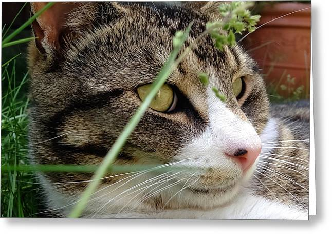 Twinkle Greeting Cards - Lazy Life of a Cat Greeting Card by F Helm