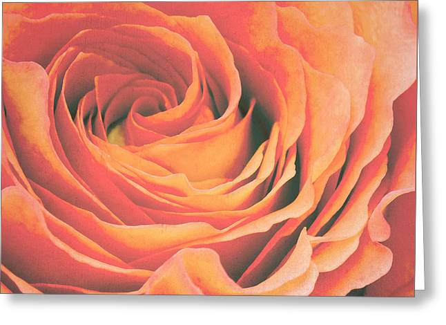 Red Rose Greeting Cards - Le petale de rose Greeting Card by Angela Doelling AD DESIGN Photo and PhotoArt