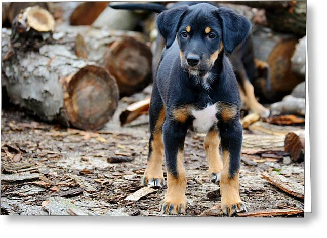 Puppies Photographs Greeting Cards - Leader Greeting Card by Kaitlynn Tidwell