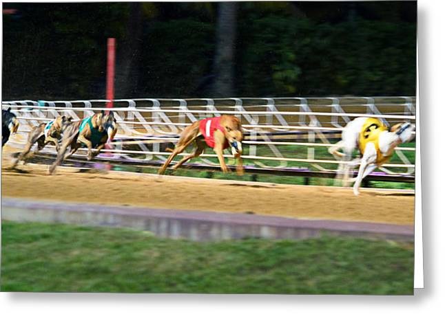 Dog Race Track Greeting Cards - Leader Of The Pack Greeting Card by Keith Armstrong