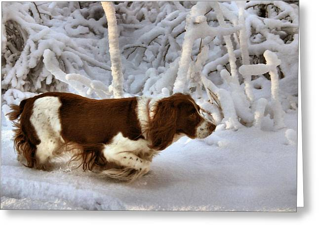Spaniel Greeting Cards - Leading the Way Greeting Card by Kristin Elmquist