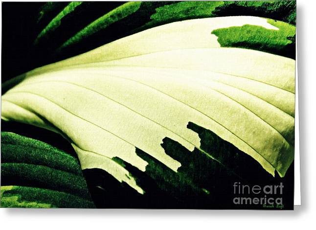 Leaf Abstract 7 Greeting Card by Sarah Loft