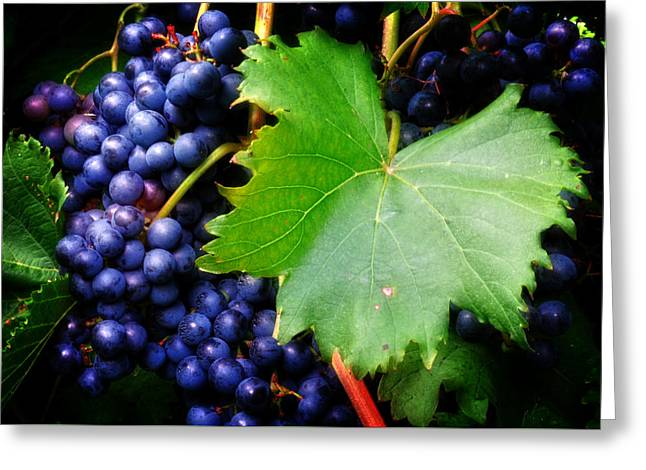 Blue Grapes Greeting Cards - Leaf and Grapes Greeting Card by Greg Mimbs