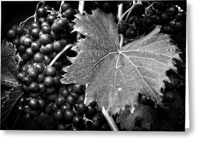 Grape Vine Greeting Cards - Leaf and Grapes in Black and White Greeting Card by Greg Mimbs