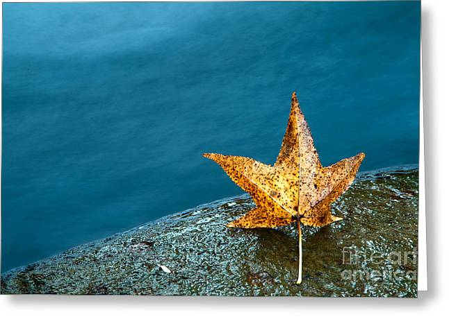Water Greeting Cards - Leaf Greeting Card by Chris Mason
