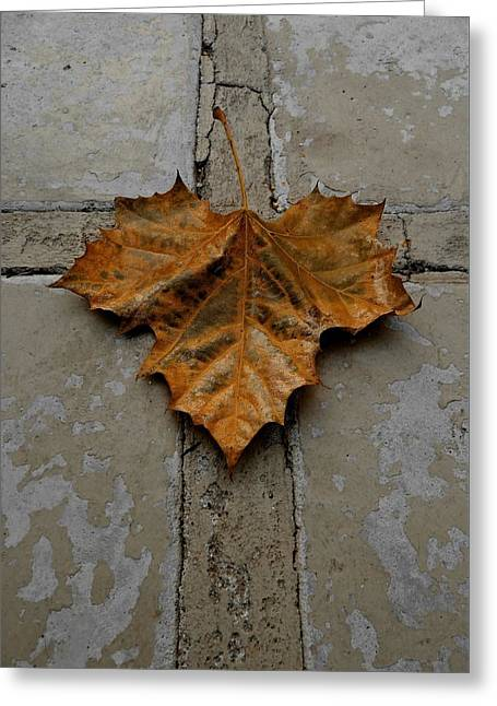 Religious Greeting Cards - Leaf Cross Greeting Card by Patricia Strand
