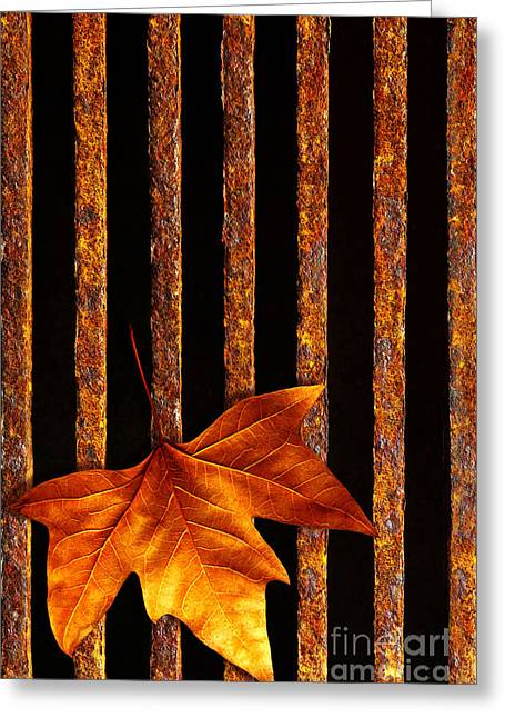 Barriers Greeting Cards - Leaf in drain Greeting Card by Carlos Caetano