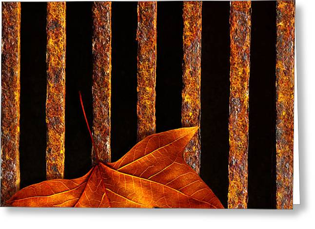 Leaf in drain Greeting Card by Carlos Caetano