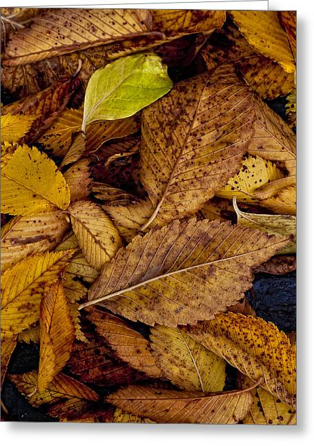 Fallen Leaf Greeting Cards - Leaf Litter Greeting Card by Robert Ullmann