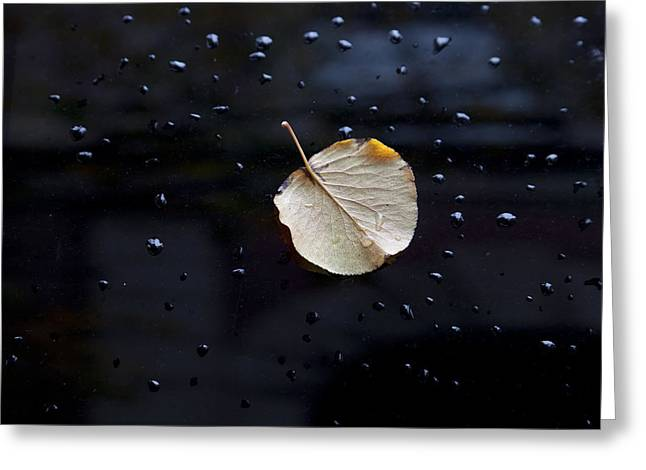Fallen Leaf Greeting Cards - Leaf on Car Door Greeting Card by Robert Ullmann