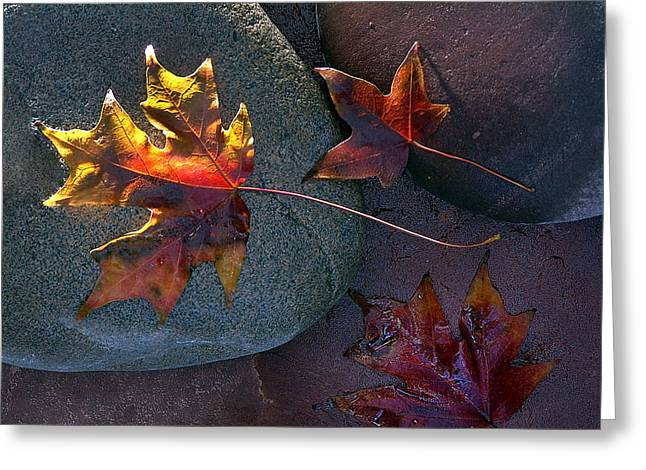 Oak Creek Greeting Cards - Leaf on Stone Greeting Card by Don Wolf