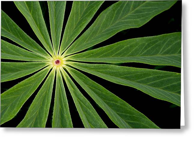 Leaf Pattern Greeting Card by Jean Noren