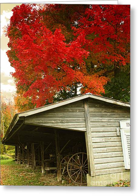 Leaf Peeping Greeting Card by Mindy Sommers
