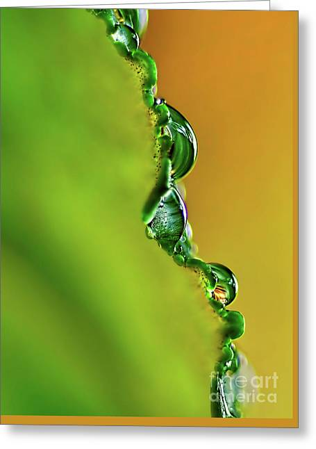 Leaf Profile And Water Droplets Greeting Card by Kaye Menner