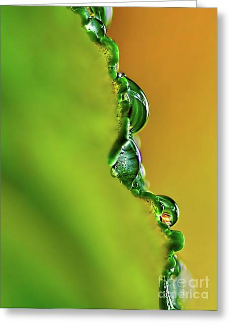 Green And Yellow Abstract Greeting Cards - Leaf Profile and Water Droplets Greeting Card by Kaye Menner