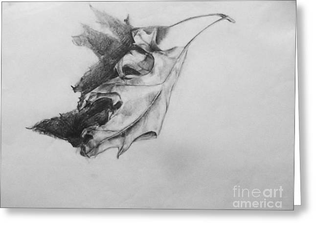 Organic Drawings Greeting Cards - Leaf Study Variation IV Greeting Card by Jamey Balester