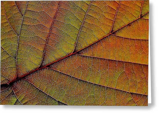Lifeline Greeting Cards - Leaf Veins Greeting Card by Alexas Fotos