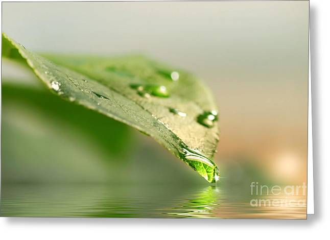 Leaf with water droplets Greeting Card by Sandra Cunningham
