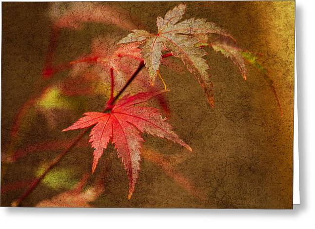 Red Leaves Greeting Cards - Leaf Zen R Greeting Card by Rebecca Cozart