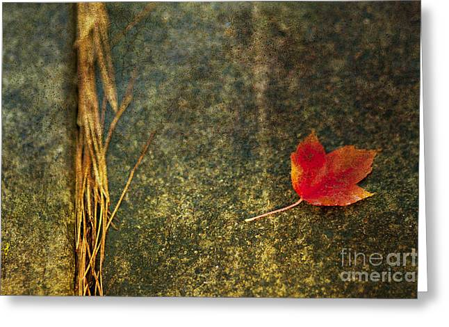 Leafs Greeting Cards - Leaf Zen S Greeting Card by Rebecca Cozart